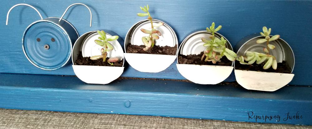 How to Repurpose Tuna Cans into Caterpillar Succulent Planter