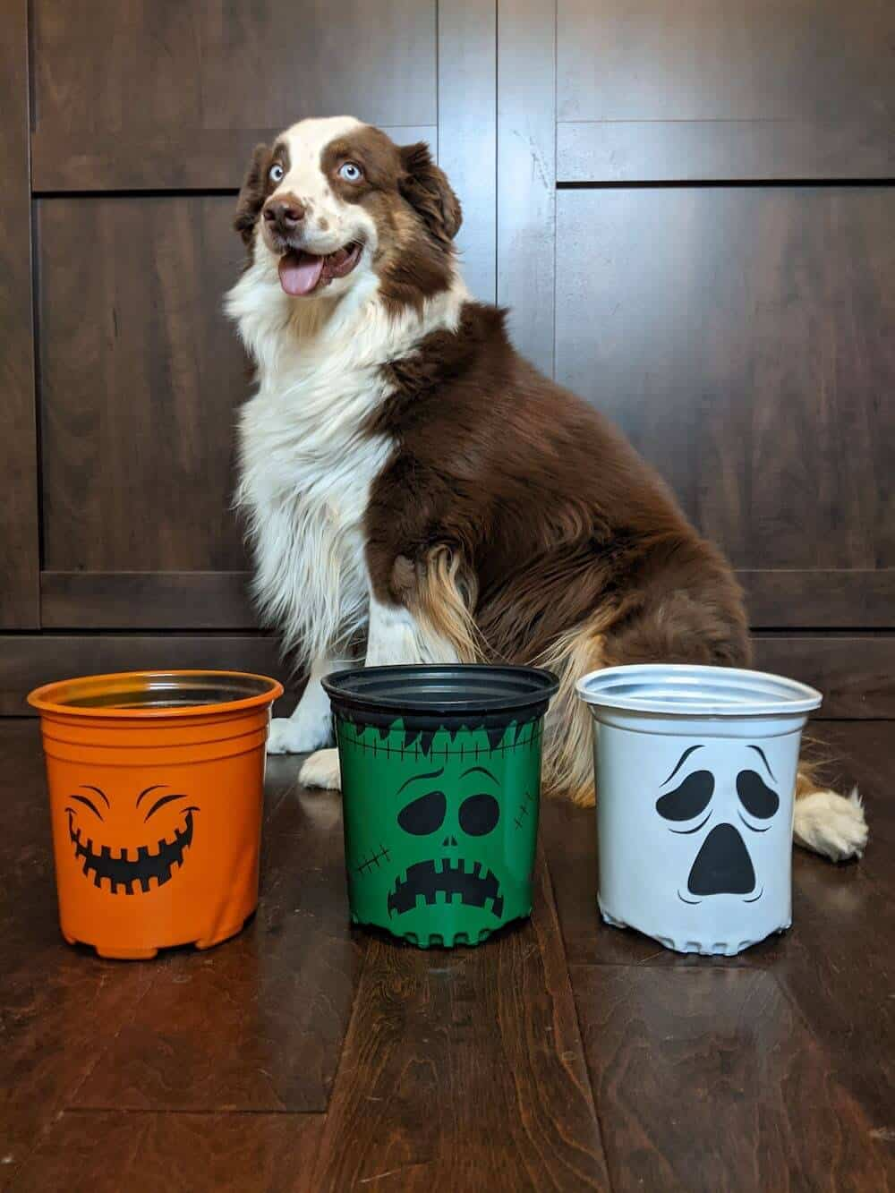 Halloween plastic plant pot project Cricut vinyl spray paint with dog